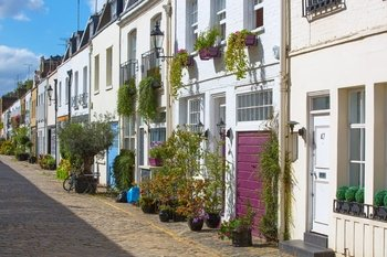 4 mews property planting tips to transform your outdoor space